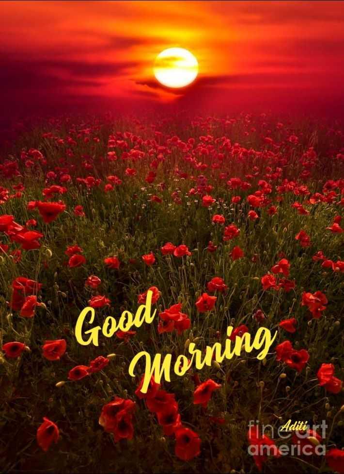 🌞 ഗുഡ് മോണിംഗ് - Good Morning fin Aditi rt america - ShareChat