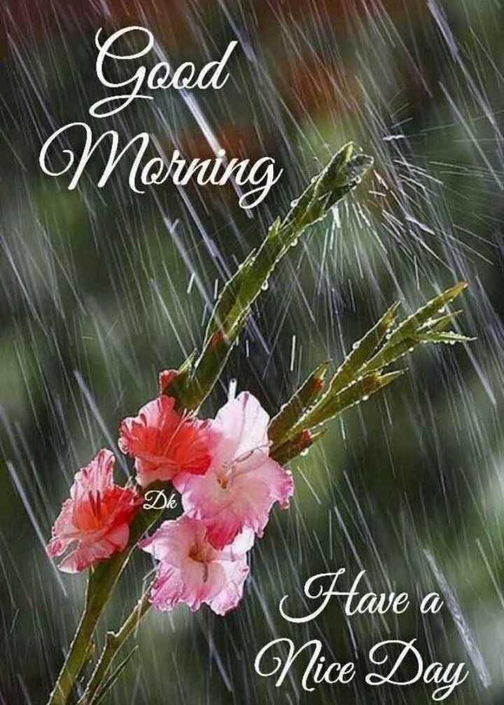 🌞 ഗുഡ് മോണിംഗ് - Good Morning / Dk Have a Nice Day - ShareChat