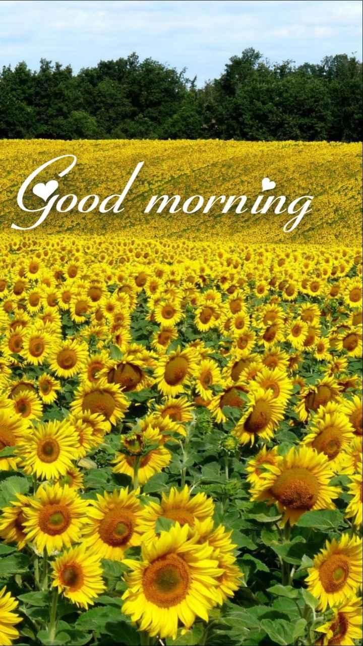 🌞 ഗുഡ് മോണിംഗ് - Good morning OOO MOVI - ShareChat