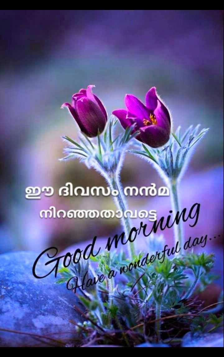 🌞 ഗുഡ് മോണിംഗ് - ഈ ദിവസം നൻമ നിറഞ്ഞതാവട്ടെ Good morning a wonderful day - ShareChat