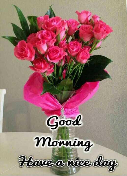 🌞 ഗുഡ് മോണിംഗ് - Good Morning Have a nice day - ShareChat