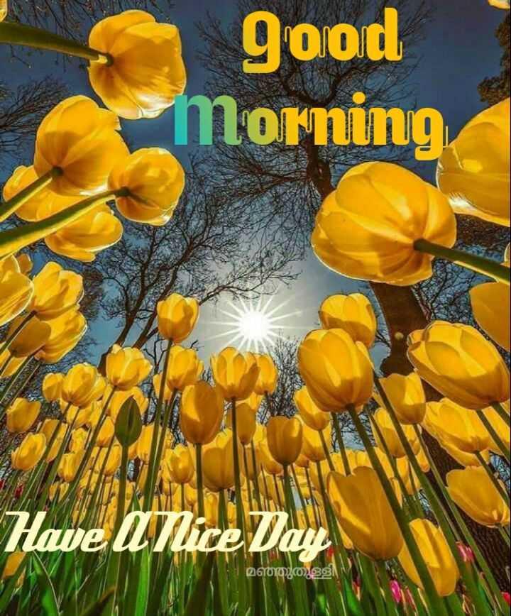🌞 ഗുഡ് മോണിംഗ് - good morning Have a nice മഞ്ഞുതുള്ളി - ShareChat
