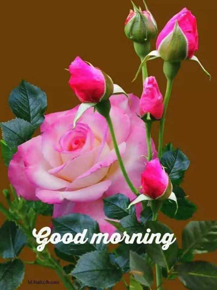 🌞 ഗുഡ് മോണിംഗ് - Good morning M . Hatiz . b . com - ShareChat