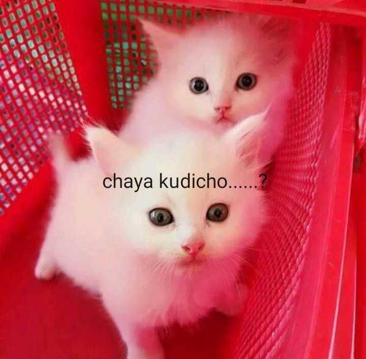 👋 ചാറ്റും ചര്ച്ചയും - chaya kudicho . . 0 ERBICE ECNO CECOCOCE LECOBIS BEIBO - ShareChat