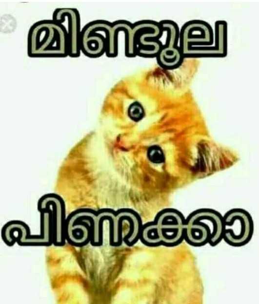 😂 തള്ളുകള് - മില പിണക്ക - ShareChat