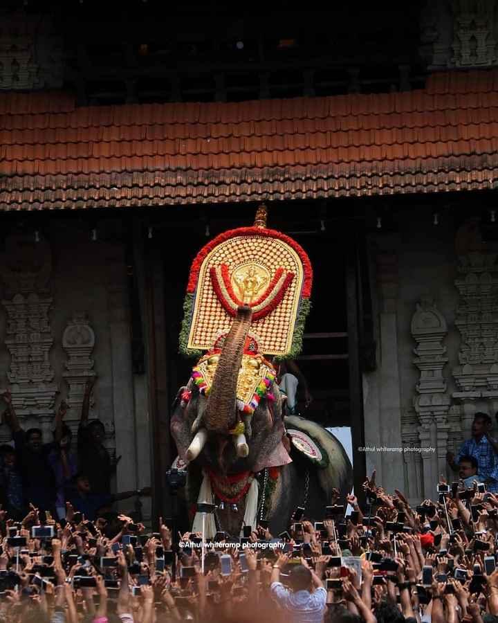 തൃശൂർ പൂരം - Athul whiteromp photography ©Athul whitéramp photography - ShareChat