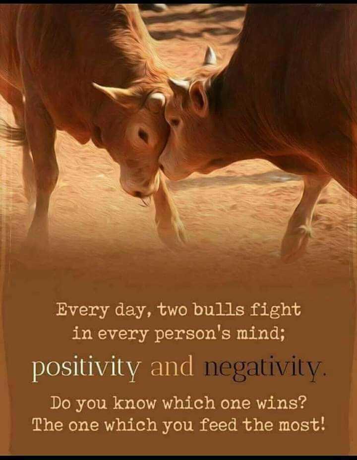 📙 നോവൽ - Every day , two bulls fight in every person ' s mind ; positivity and negativity Do you know which one wins ? The one which you feed the most ! - ShareChat