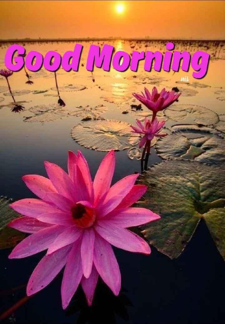 🌳 പൂക്കളും മരങ്ങളും - Good Morning - ShareChat