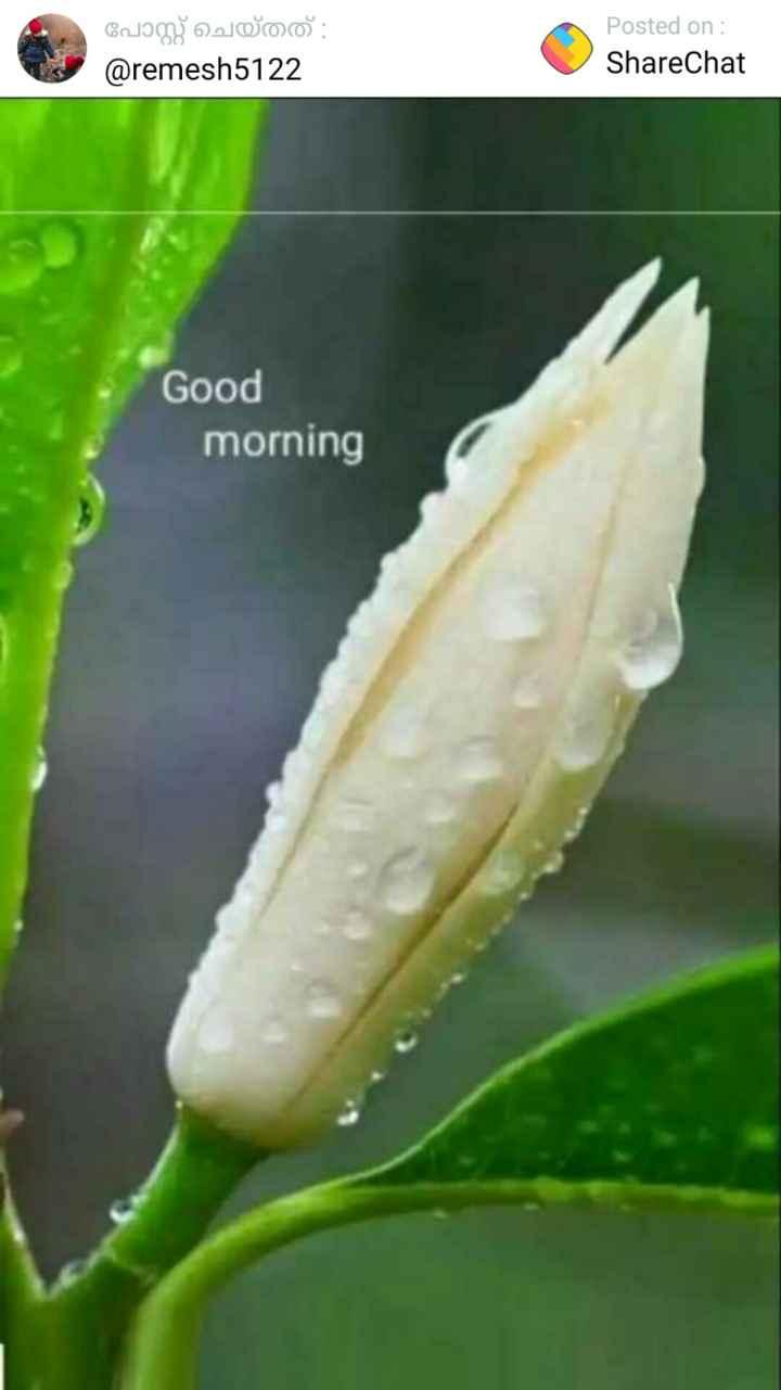 💪 ശൈലജ ടീച്ചർ ഇഷ്ടം - പോസ്റ്റ് ചെയ്തത് : @ remesh5122 O Posted on : ShareChat Good morning - ShareChat