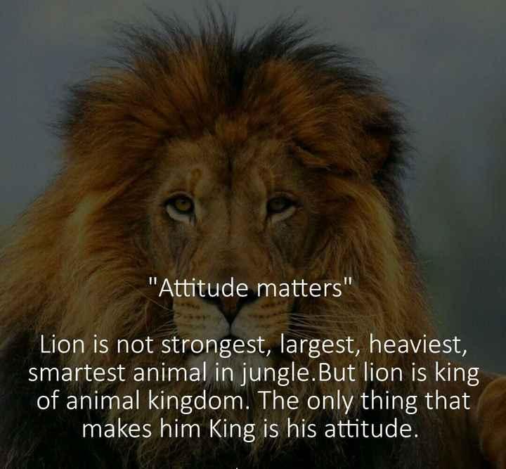🗽 ഷെയര്ചാറ്റ് വിശേഷങ്ങള് - ' Attitude matters Lion is not strongest , largest , heaviest , smartest animal in jungle . But lion is king of animal kingdom . The only thing that makes him King is his attitude . - ShareChat