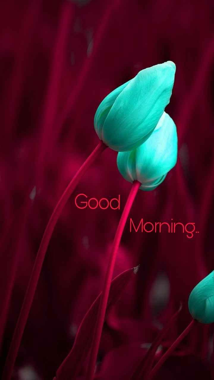 🤝 സുഹൃദ്ബന്ധം - Good Morning . - ShareChat