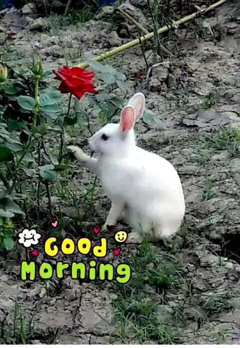👩🏽💻আমার প্রতিভা - GOOD . Morning - ShareChat