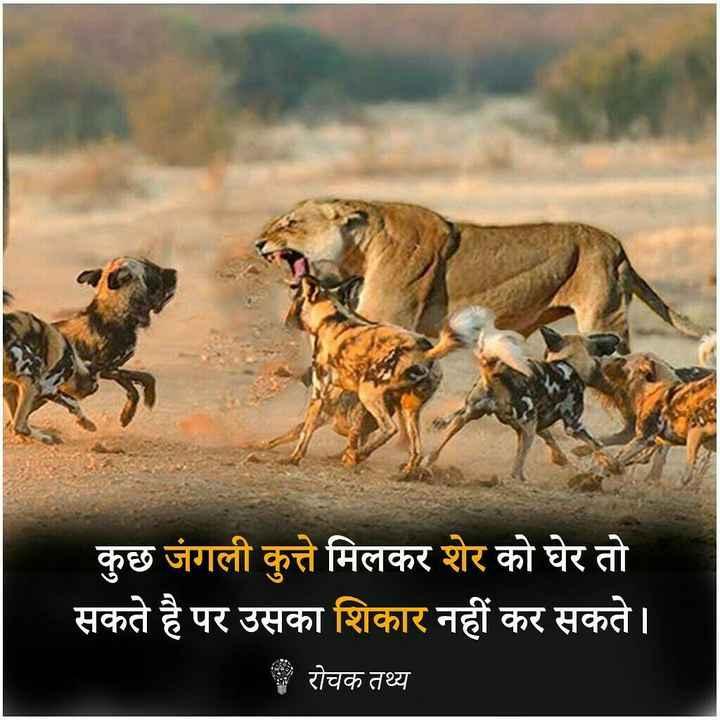 🤼♂️ WWE - कुछ जंगली कुत्ते मिलकर शेर को घेर तो सकते है पर उसका शिकार नहीं कर सकते । रोचक तथ्य - ShareChat
