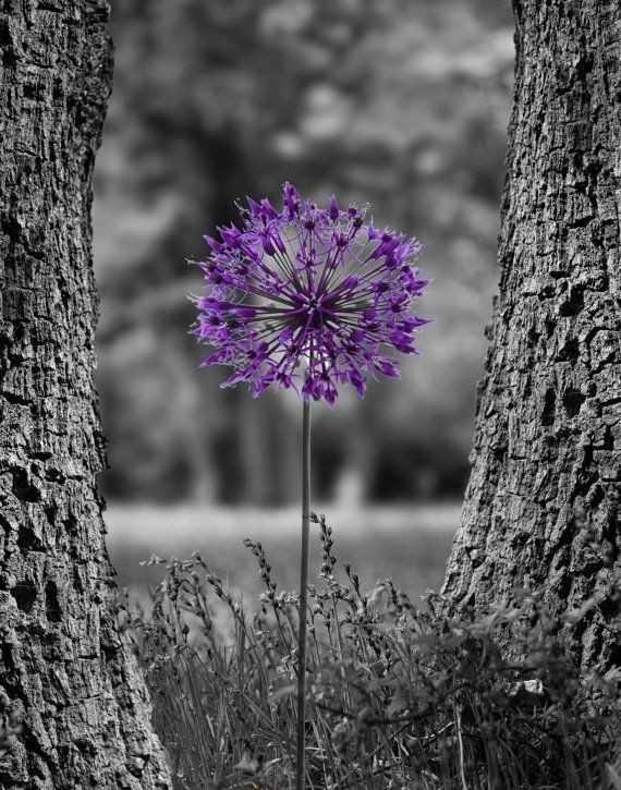 👨🏽💻 best photo edits - ShareChat