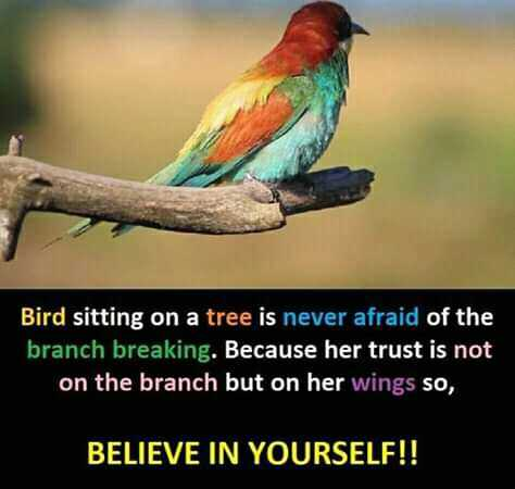 ✍️కోట్స్ - Bird sitting on a tree is never afraid of the branch breaking . Because her trust is not on the branch but on her wings so , BELIEVE IN YOURSELF ! ! - ShareChat
