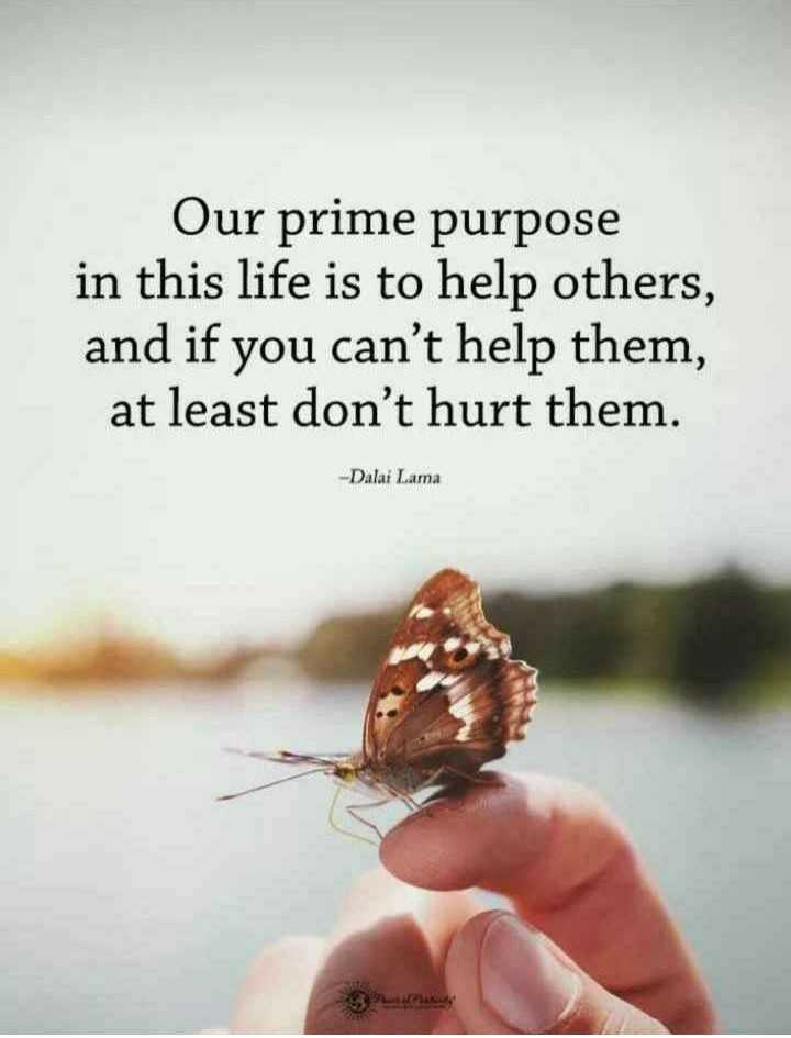 ✍️  Motivatinal Quotes - Our prime purpose in this life is to help others , and if you can ' t help them , at least don ' t hurt them . - Dalai Lama - ShareChat