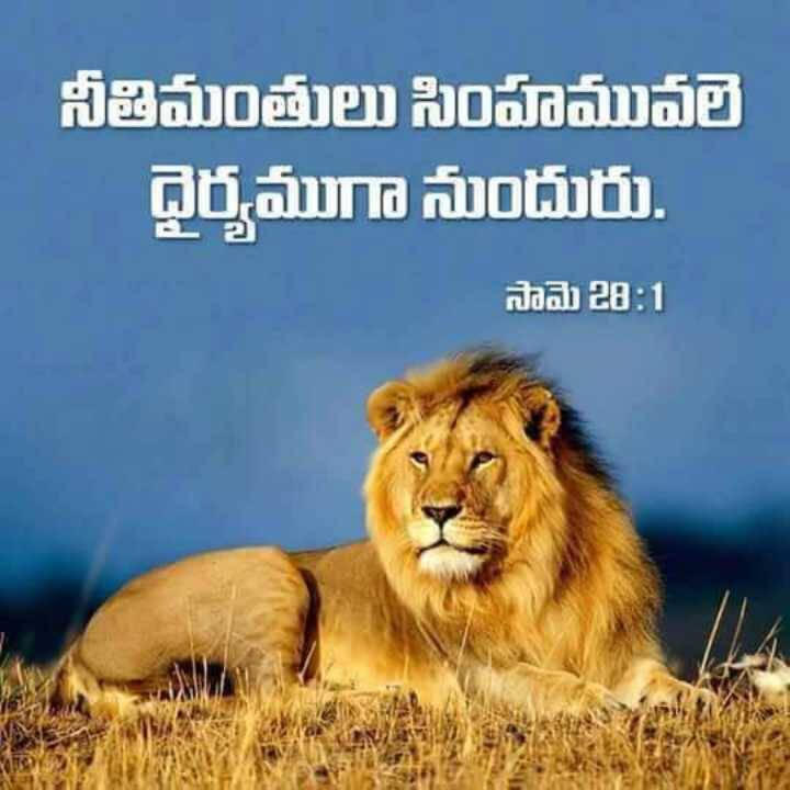 ✝జీసస్ - నీతిమంతులు సింహమువలె ధైర్యముగా నుందురు . A సామె 28 : 1 - ShareChat