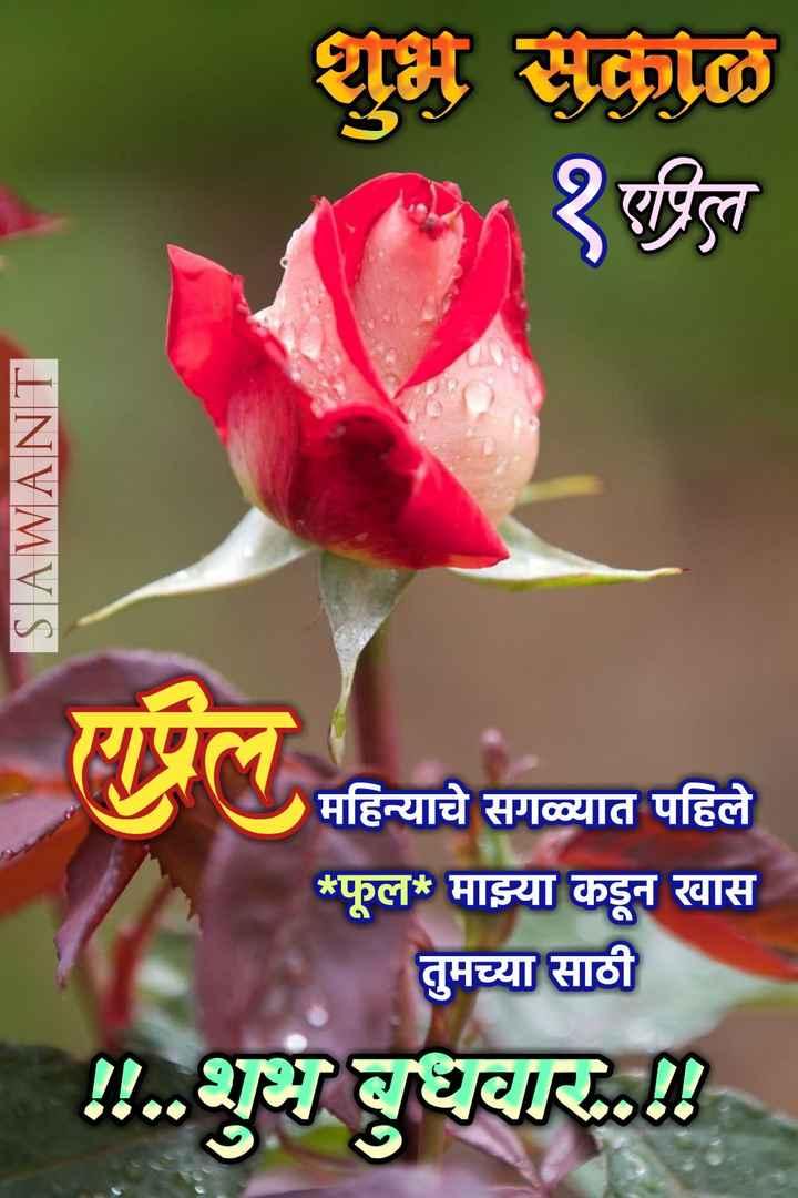 ✨बुधवार स्पेशल - शुभ सकाळ १पिल SAWANT महिन्याचे सगळ्यात पहिले * फूल * माझ्या कडून खास तुमच्या साठी ! ! . . शुभ बुधवार . . ॥ - ShareChat