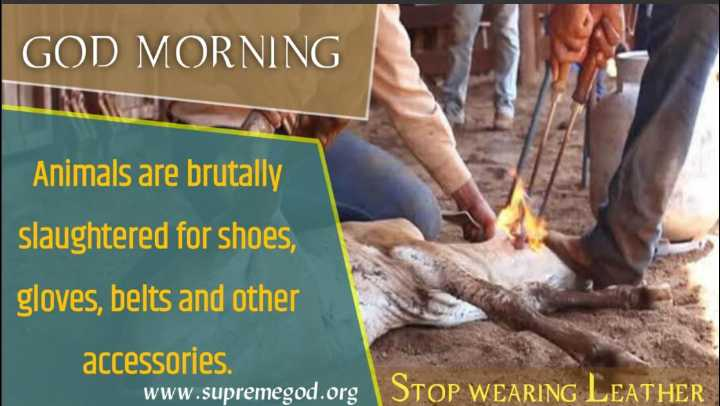 ❤ करवा चौथ - GOD MORNING Animals are brutally slaughtered for shoes , gloves , belts and other accessories www . supremegod . org | STOP WEARING LEATHER - ShareChat