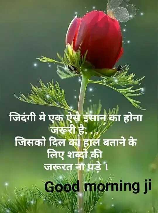 ❤ गुड मॉर्निंग शायरी👍 - जिदंगी मे एक ऐसे इंसान का होना जरूरी है . . . जिसको दिल का हाल बताने के लिए शब्दों की जरूरत ना पड़े । Good morning ji - ShareChat