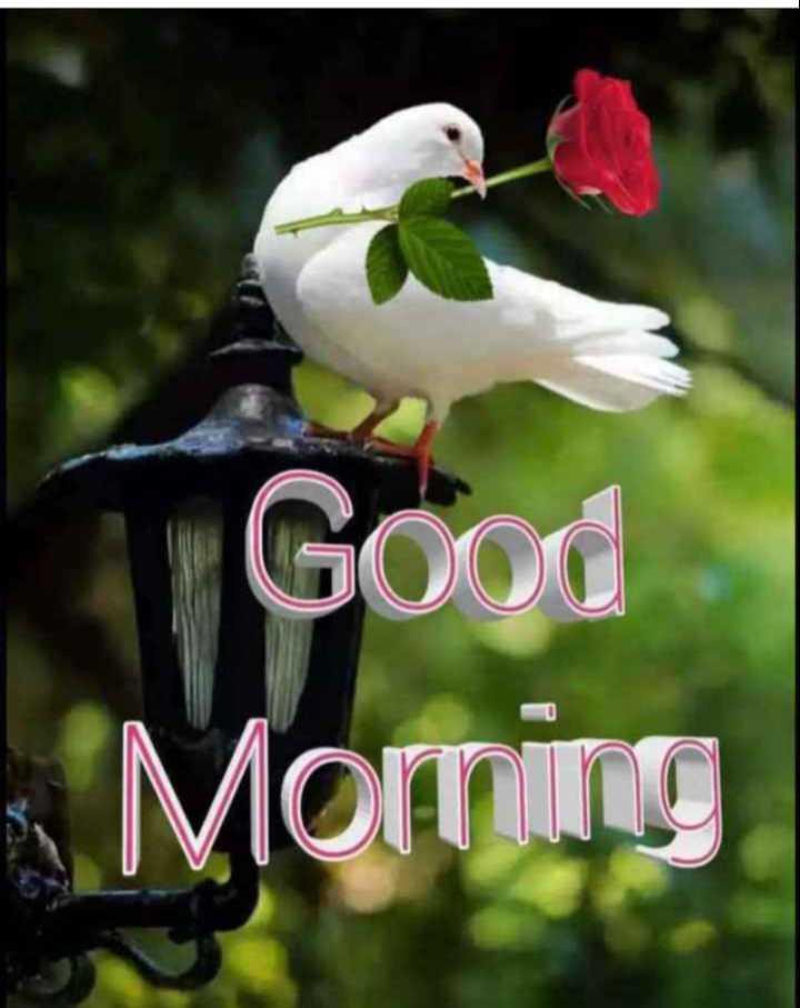 ❤❤cg family ❤❤ - Good Morning - ShareChat