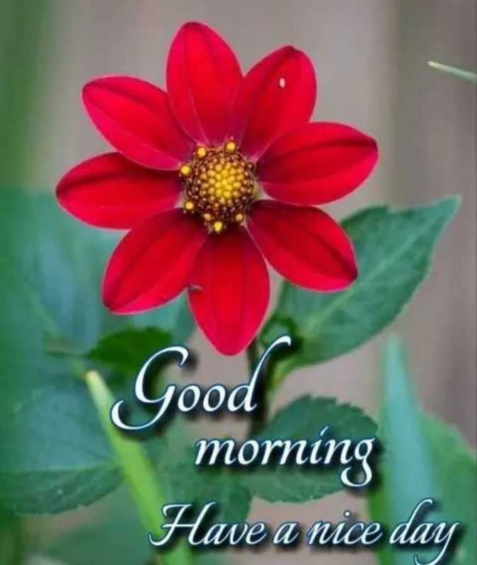 ❤️नमस्कार - Good morning Have a nice day - ShareChat