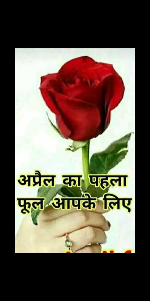 ❤️️ प्यार भरे मैसेज - अप्रैल का पहला फूल आपके लिए - ShareChat