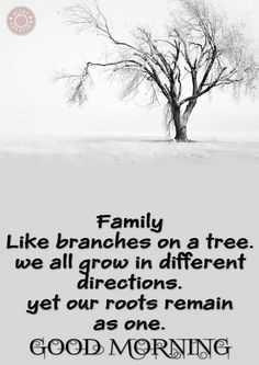 🗨️ अनटोल्ड फीलिंग्स 🗯️ - Family Like branches on a tree . we all grow in different directions . yet our roots remain as one . GOOD MORNING - ShareChat
