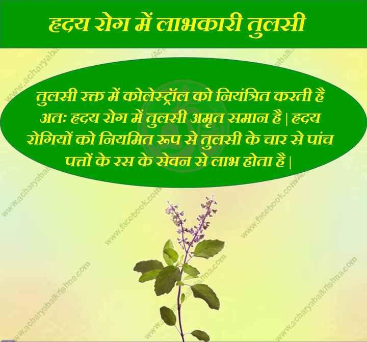 ⚕️आरोग्य - हृदय रोग में लाभकारी तुलसी www . acharyab तुलसीरक्त में कोलेस्ट्रॉल को नियंत्रित करती है अत : हृदय रोग में तुलसी अमृत समान है । हृदय रोगियों को नियमित रूपसे तुलसी के चार से पांच पत्तों केरस के सेवन से लाभ होता है । www . acharyaball www . facebook . con www . facebook . coIDA hna . com ww . acharyabalkrishna . com www . acharyabalkrishna . com www . - ShareChat