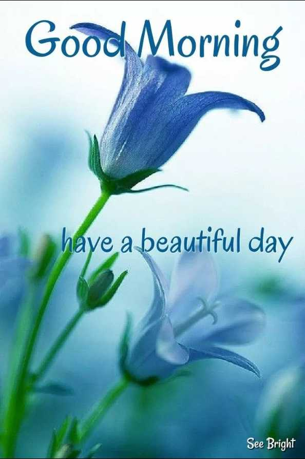 ☀️गुड मॉर्निंग☀️ - Good Morning have a beautiful day See Bright - ShareChat