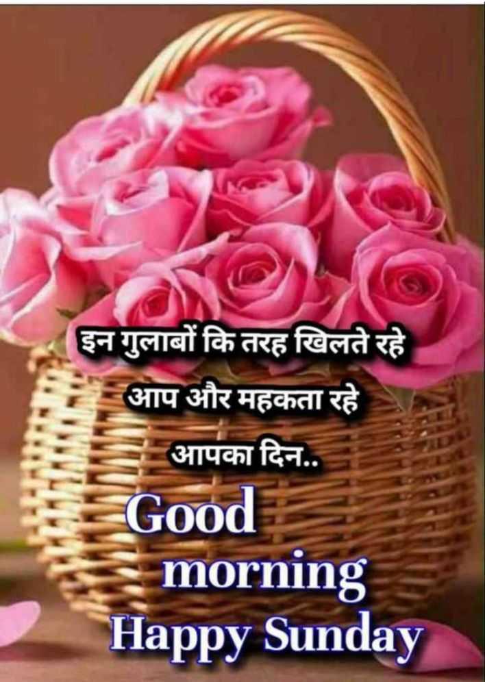 ☀️गुड मॉर्निंग☀️ - इन गुलाबों कि तरह खिलते रहे आप और महकता रहे आपका दिन . . Good morning Happy Sunday - ShareChat