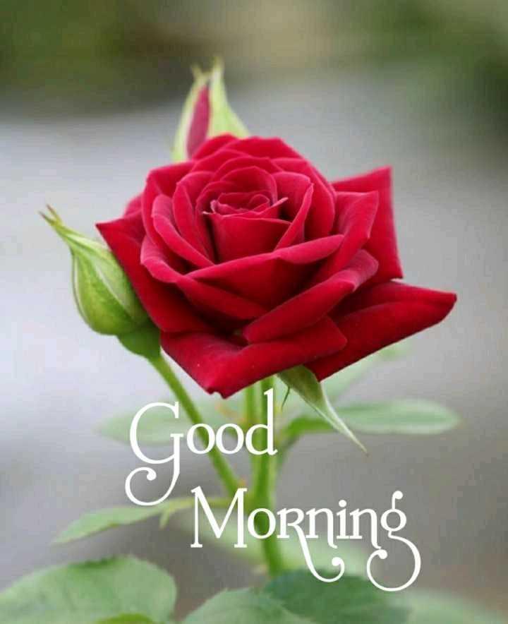 ☀️गुड मॉर्निंग☀️ - Good Morning - ShareChat