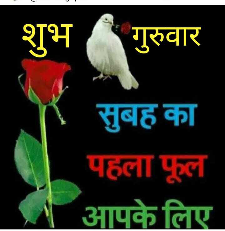 🖊️ लव शायरी और status ❤️ - शुभ गुरुवार सुबह का पहला फूल आपके लिए - ShareChat