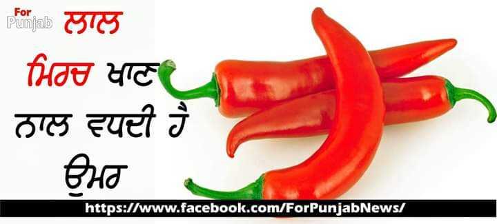 🌶️ ਮਿਰਚ ਡੇ - For Punjab For ਲਾਲ ਮਿਰਚ ਖਾਣਾ ਨਾਲ ਵਧਦੀ ਹੈ । ਉਮਰ . https : / / www . facebook . com / ForPunjabNews / - ShareChat
