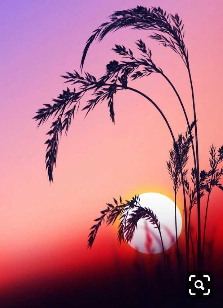 🏕️ કુદરતી ફોટોગ્રાફી - ܘܶܢ - ShareChat