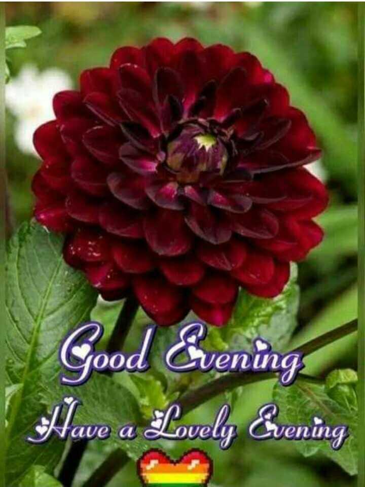 ☕️மாலை வணக்கம் - Good Evening Have a Lovely Evening - ShareChat