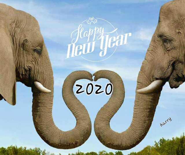 🥳️ Happy New Year - Happy New Year 2020 harry - ShareChat