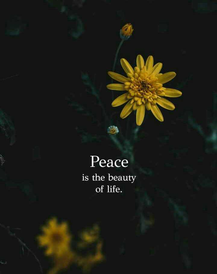 .... - Peace is the beauty of life . - ShareChat