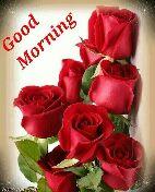 🌞காலை வணக்கம் - Good Morning Rose Paradise  - ShareChat
