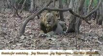 jay rajputana - ( ( URMAR @ United _ Rajputana thanks for watching . . Jay Bhavani . . jay Rajpoolana . . . Har Har - ShareChat