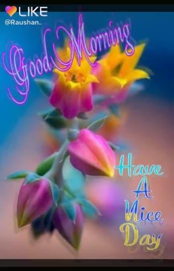 🏋️♂️ ফিটনেছ টিপছ - LIKE @ Raushan . . Very Beautiful Good Morning . . . . OLIKEAPP Magic Video Maker & Community - ShareChat