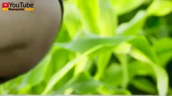 kiss 💋 kiss kiss kiss 💋 kiss kiss kiss 💋💋 - YouTube MR Romantic Cherry YouTube MR Romantic Cherry - ShareChat