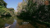 ગરવો ગિરનાર - long live fauna of the Gir ( names of birds , animals and reptiles ) - ShareChat