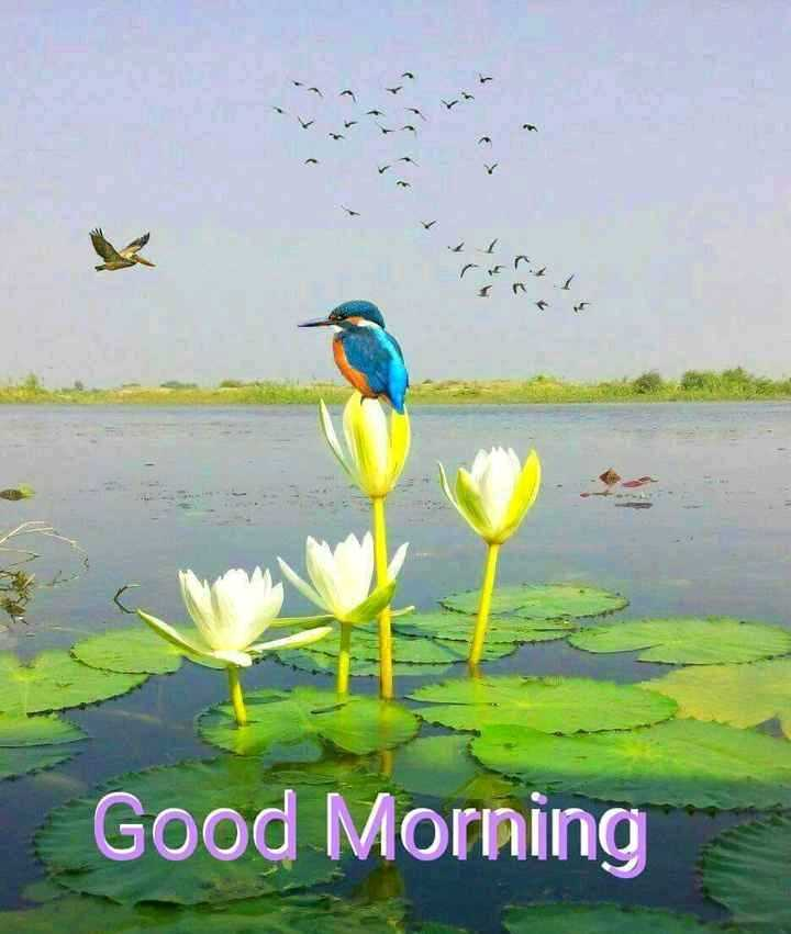 🌞সুপ্রভাত - ( Good Morning - ShareChat