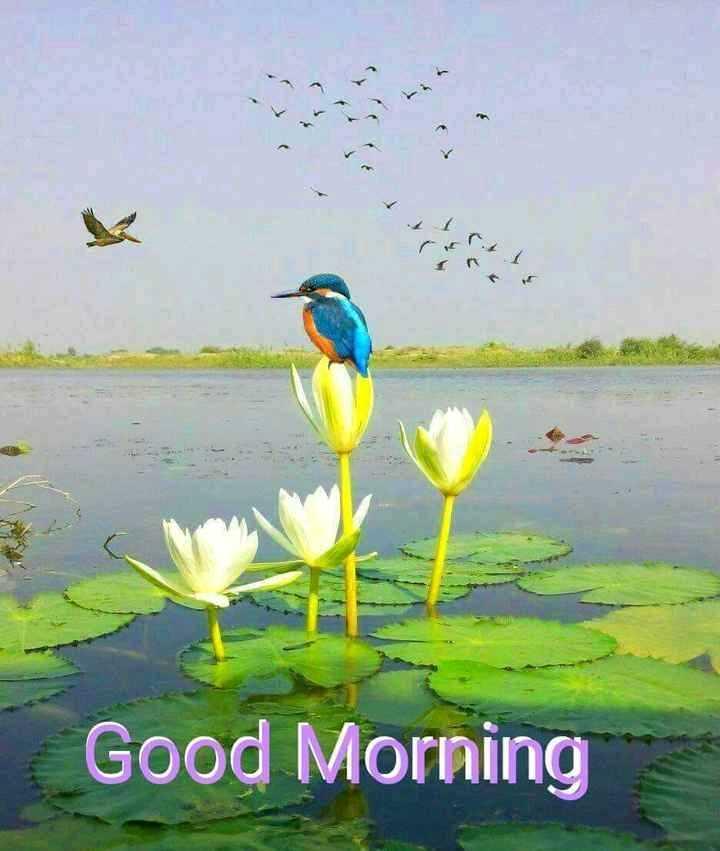 🌞সুপ্রভাত - ( Good Morning - ShareChat