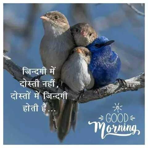 13 - 7 हो - जिन्दगी में दोस्ती नहीं , दोस्तों में जिन्दगी होती है . . . GOOD Morning - ShareChat