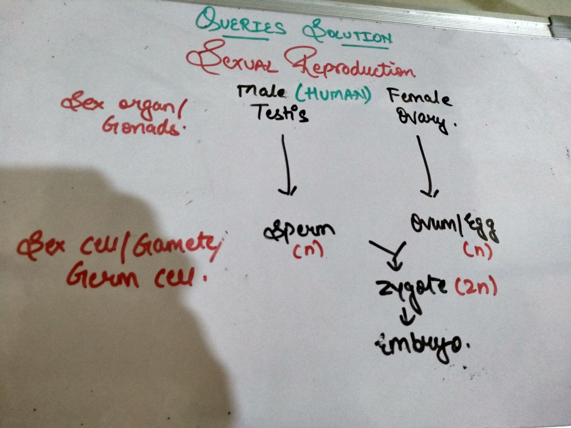कक्षा 10 - ShareChat