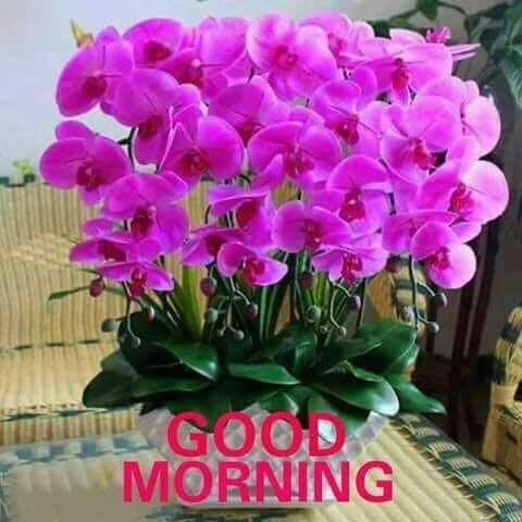 ഗുഡ് മോണിംഗ് - ShareChat