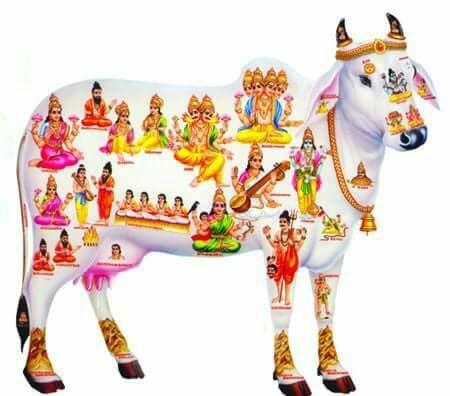 ধাৰ্মীয় ফটো  - ShareChat