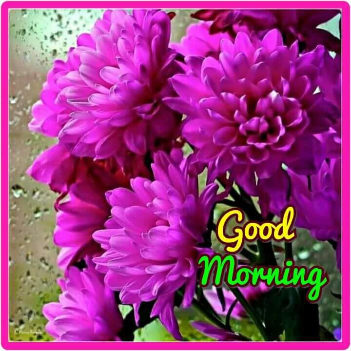 Nisha Panjle Author On Sharechat Good Morning Ji Radhe Radhe Ji